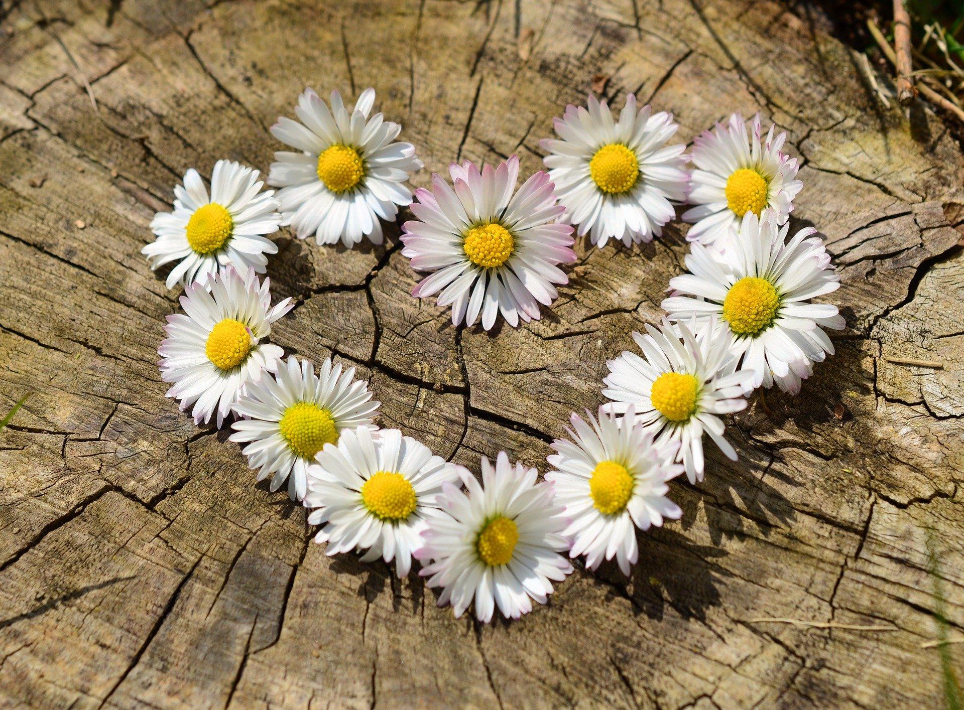 R.A.M : fleurs de printemps