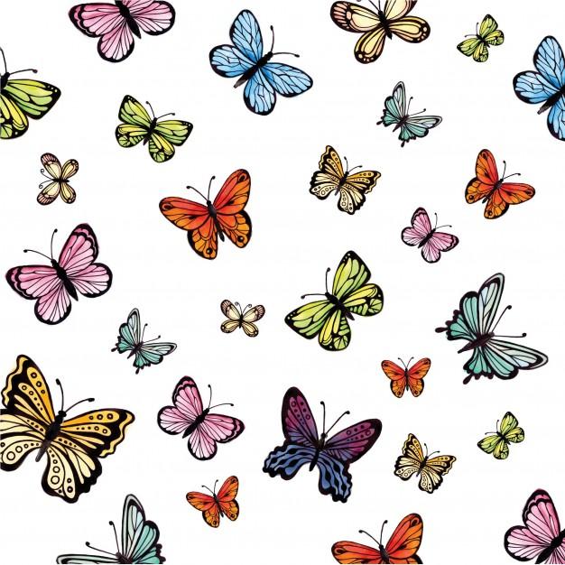 R.A.M : papillons en pagaille