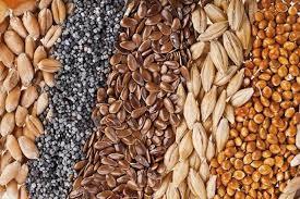 Collage de graines