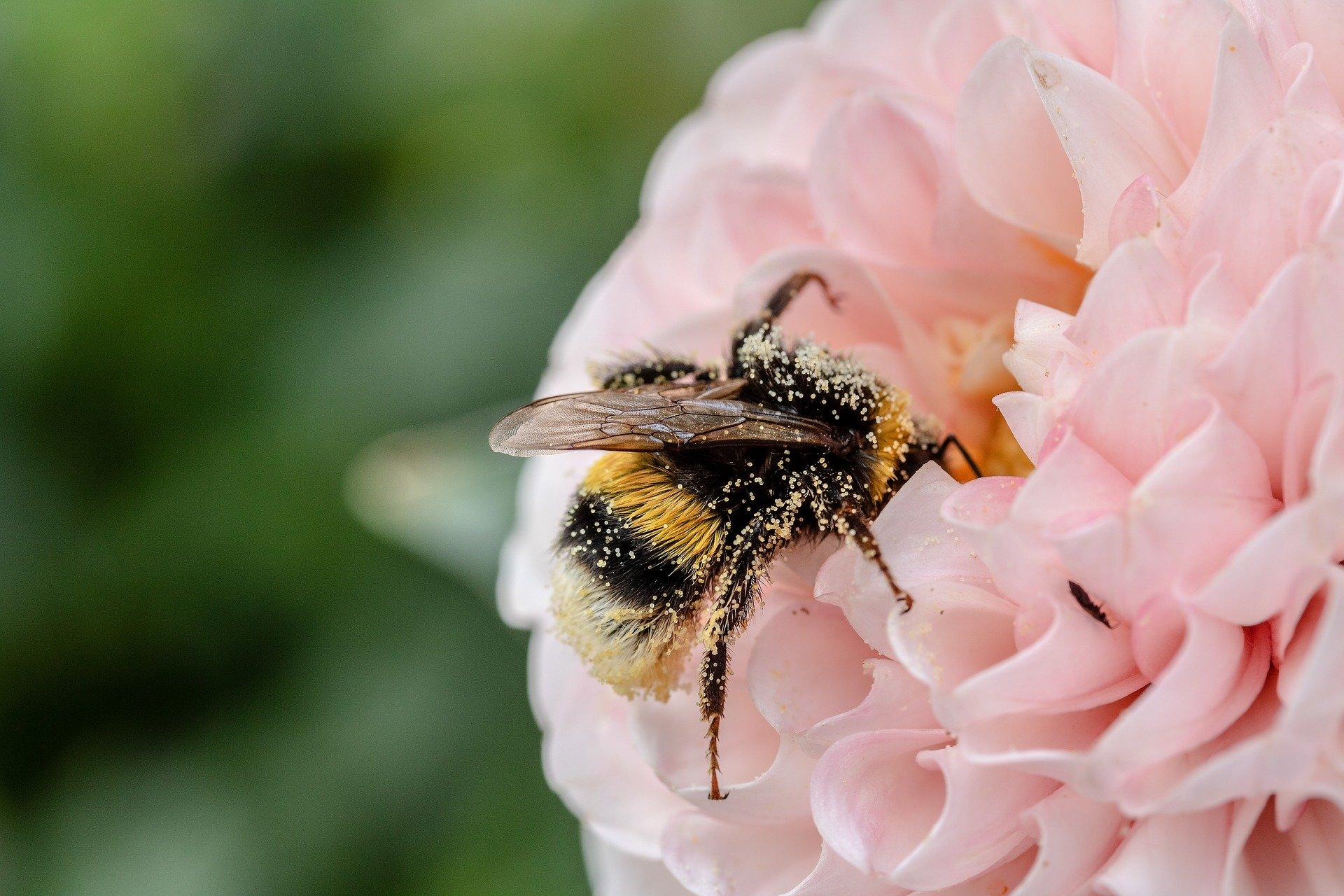 3/6 ans : Ne réveil pas le bourdon+ pique-nique  / Carte cœur d'abeille