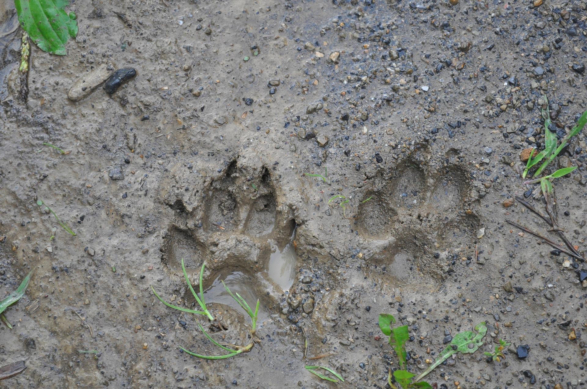 3/6 ans :Journée à Montarmin , Sur les traces des animaux