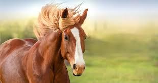 """Sortie """"à cheval sur soi"""""""
